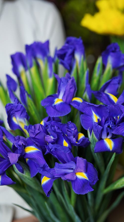 Bouquet of blooming irises with blue petals and green stems in bright place