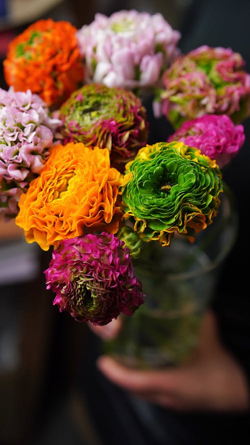 From above vivid blossoming ranunculus flowers of different colors placed in glass vase in light room