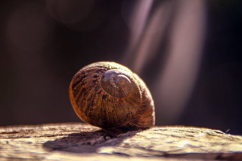 Shallow Focus Photography of Brown Snail