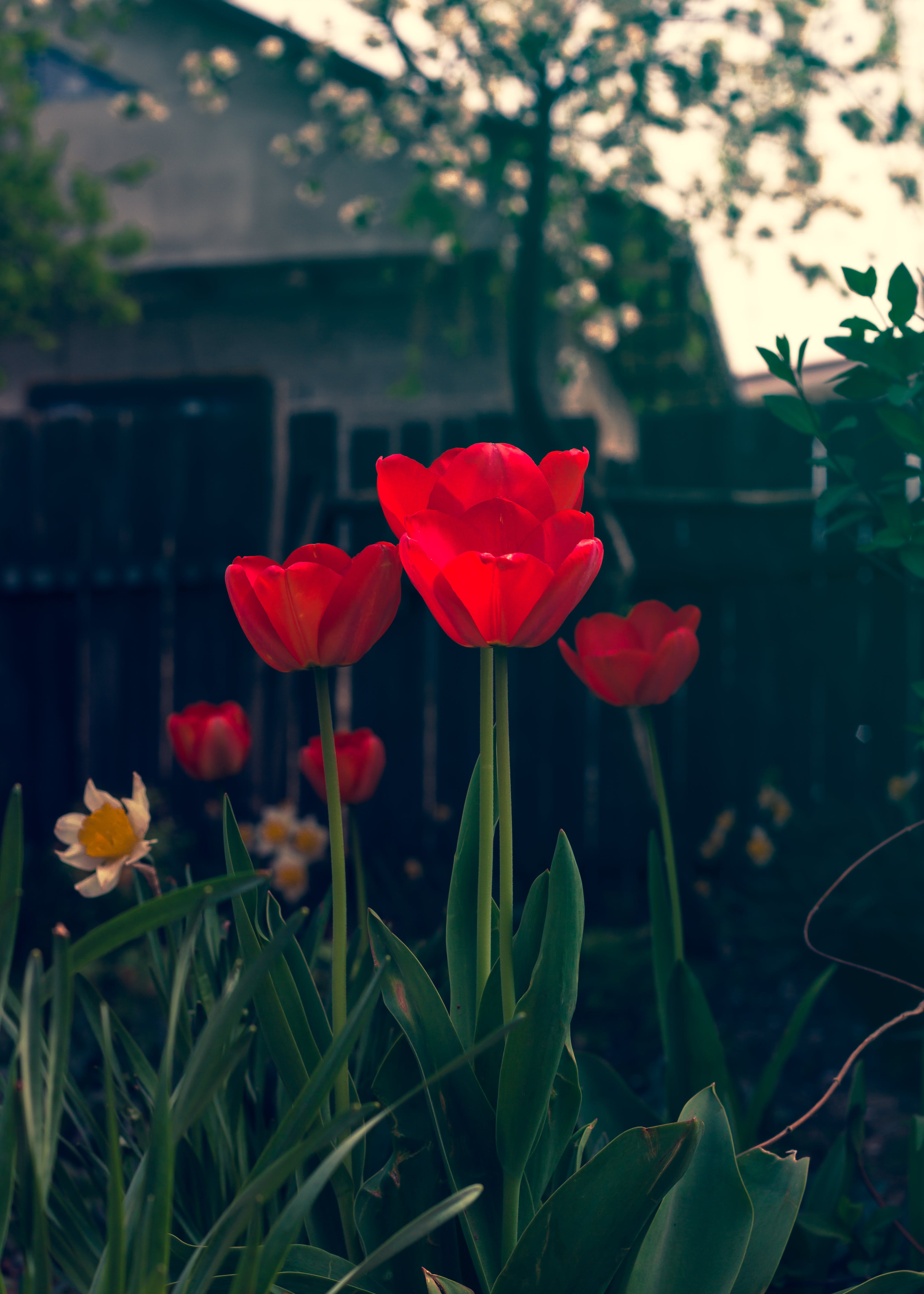 Free stock photo of flowers, garden, green, nature