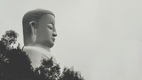 Imagine de stoc gratuită din alb-negru, antic, arbori, arhitectură