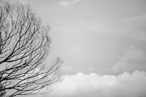 Základová fotografie zdarma na téma černobílá, krajina, mlha, mraky