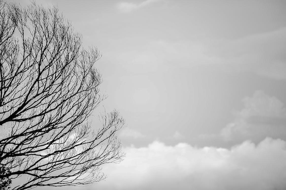 černobílá, krajina, mlha