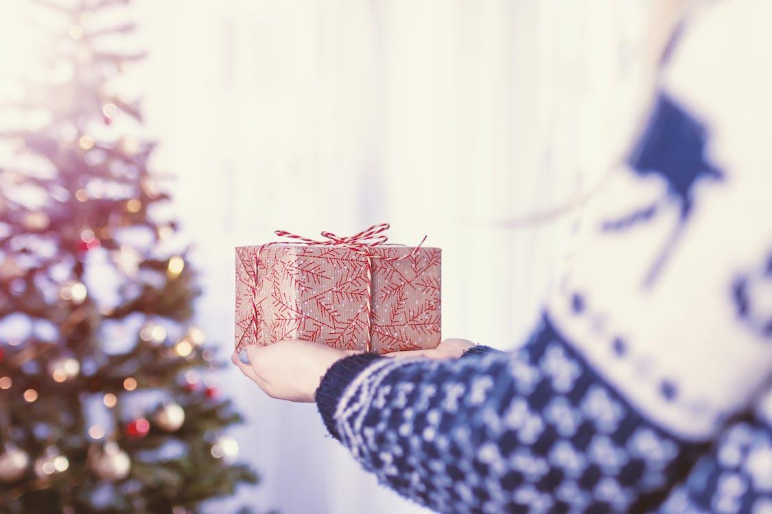 arbre, arbre de Nadal, arc