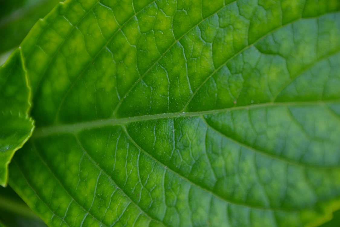 Free stock photo of green, green leaf, nature