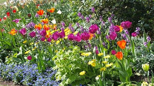 Free stock photo of flower garden, flowers