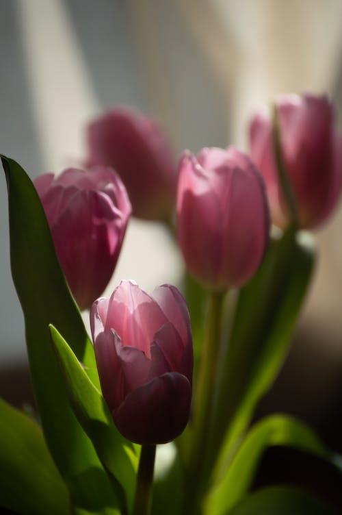 Photos gratuites de 8 mars, à l'intérieur, abondance