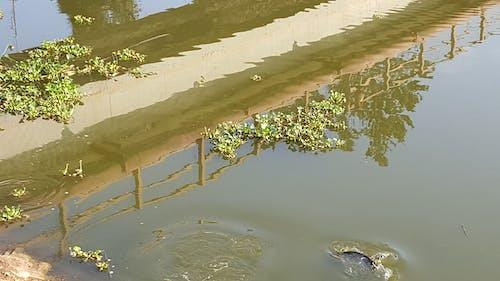 Free stock photo of bridge, reflection