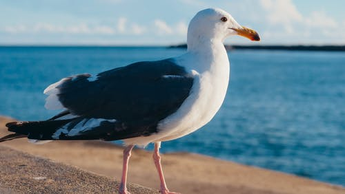 Photo of a Seagull