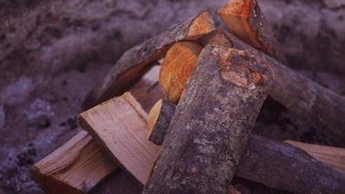 Foto stok gratis batang kayu, dari dekat, hutan