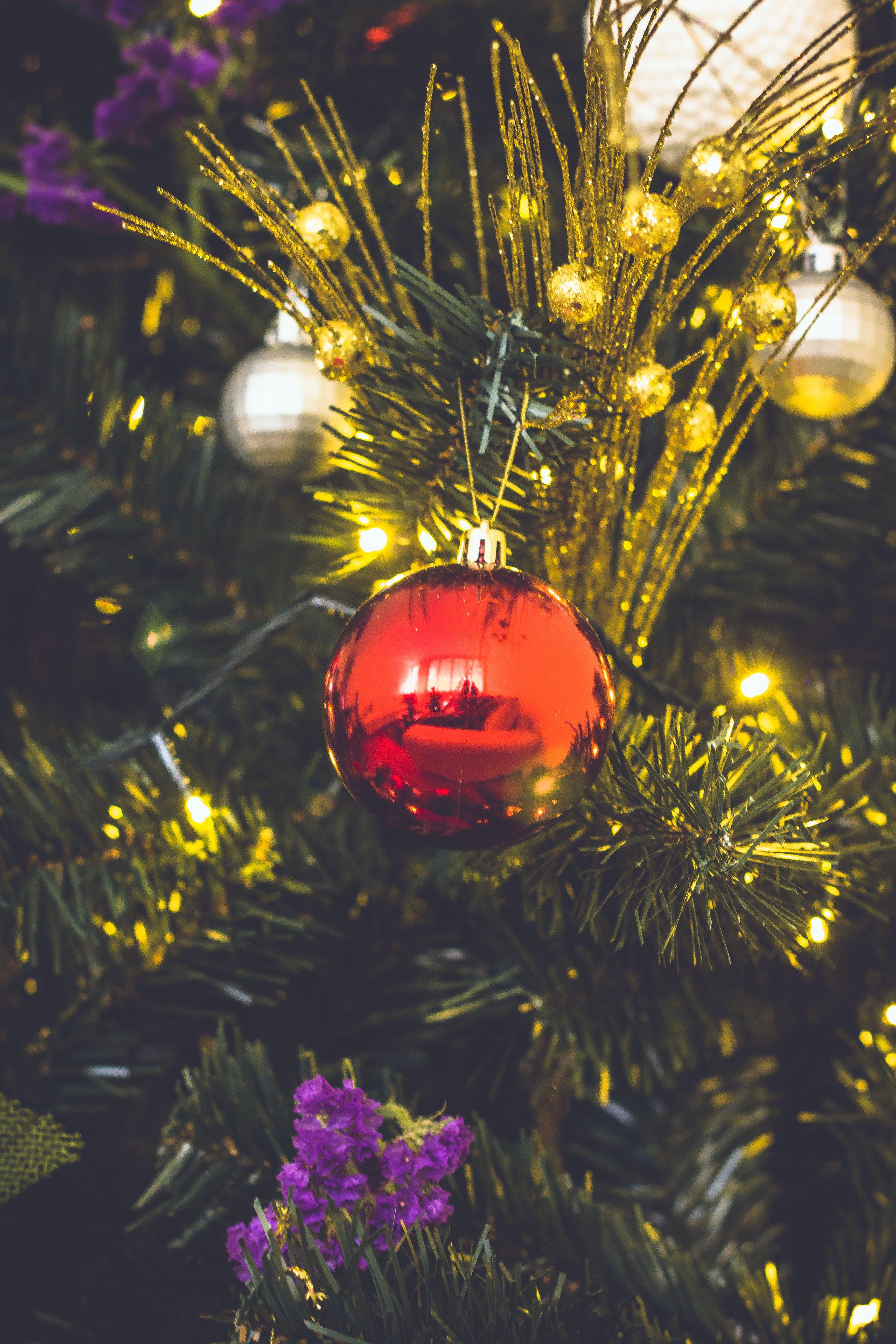 Free stock photo of christmas ball, christmas tree, holidays, tree