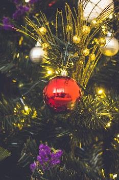 Kostenloses Stock Foto zu ferien, winter, baum, weihnachtsbaum