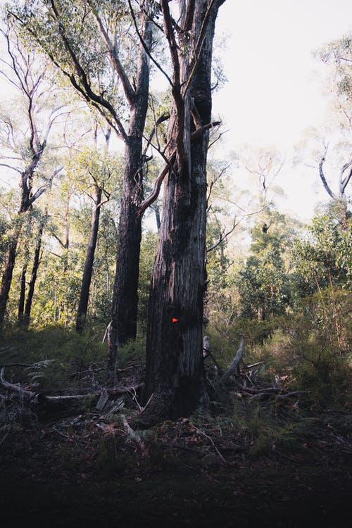 Kostenloses Stock Foto zu äste, australien, bäume
