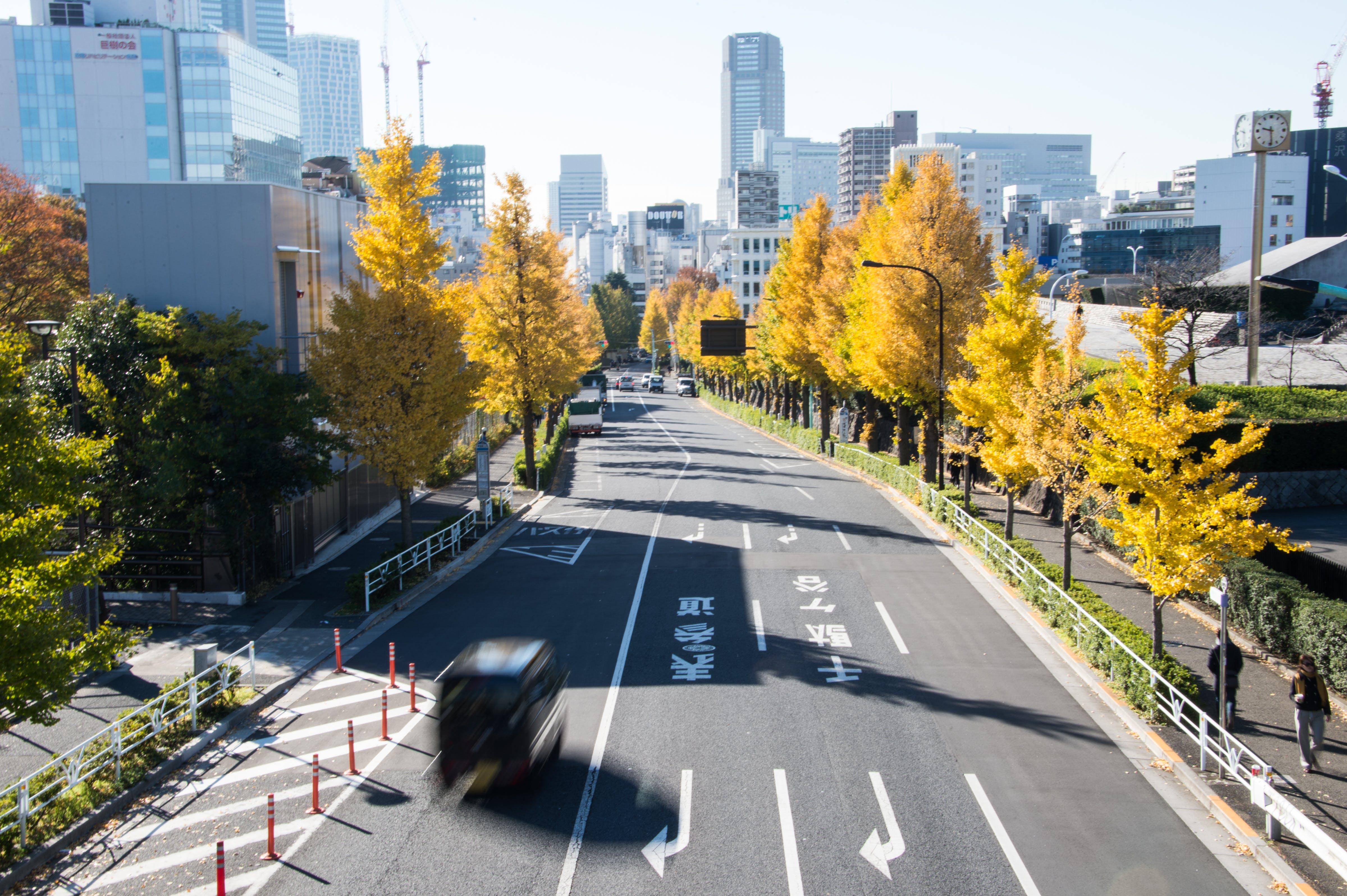 Free stock photo of street, yellow, autumn, tokyo