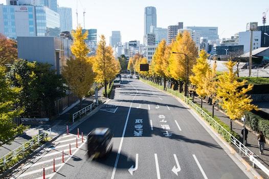 Kostenloses Stock Foto zu straße, gelb, herbst, tokio