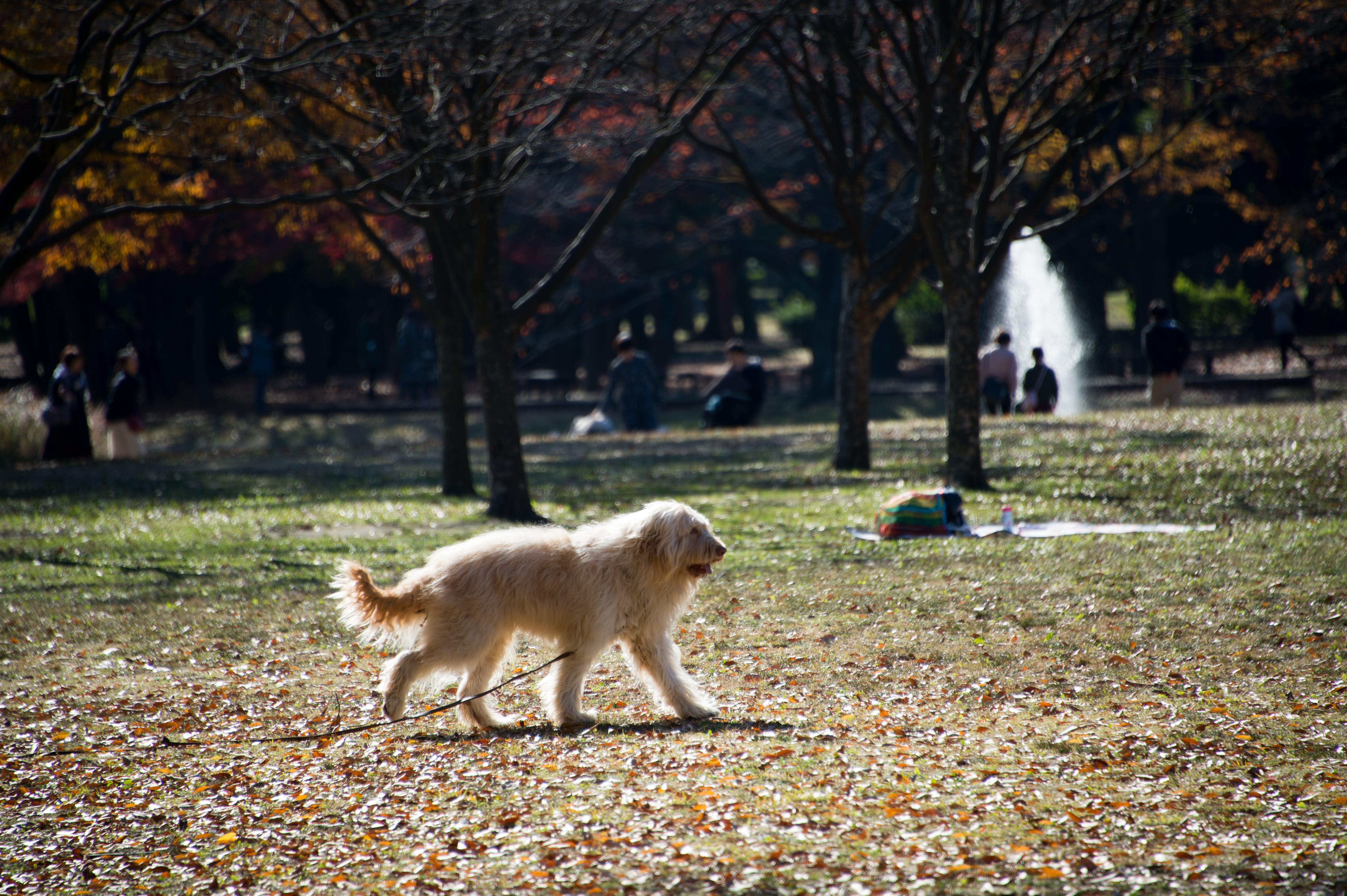 Free stock photo of dog, dried leaves, leaves, park