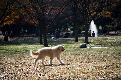 Darmowe zdjęcie z galerii z park, pies, suszone liście