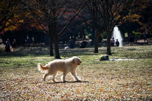 Kostenloses Stock Foto zu hund, park, blätter
