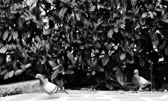 Free stock photo of nature, birds