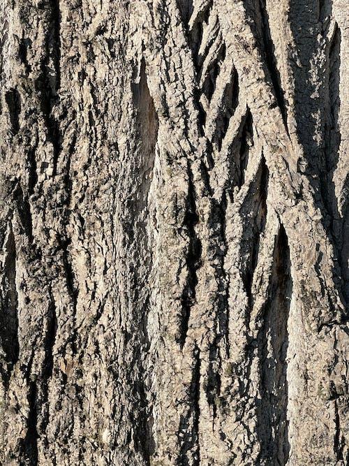 Fotos de stock gratuitas de árbol, legno, testura di legno