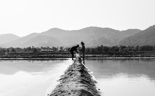 Foto d'estoc gratuïta de a l'aire lliure, agricultor, agricultors