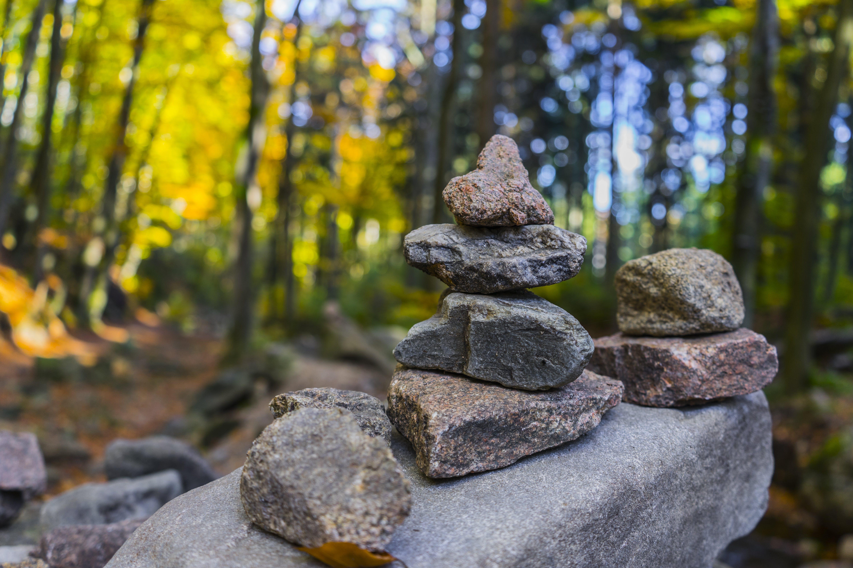 Gray Pile of Stones Near Trees