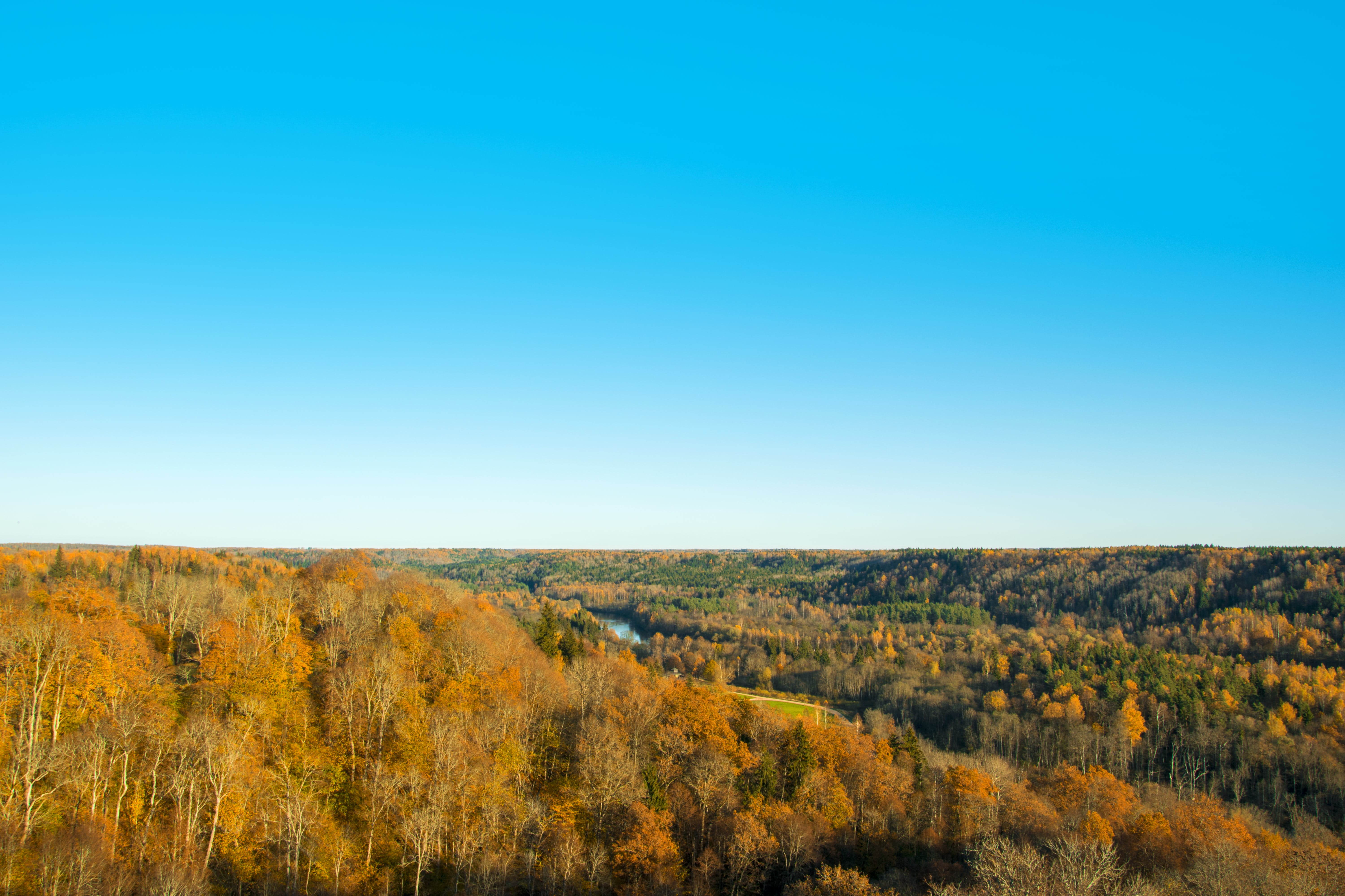 Landscape Photography of Brown Forest Under Blue Clear Sky