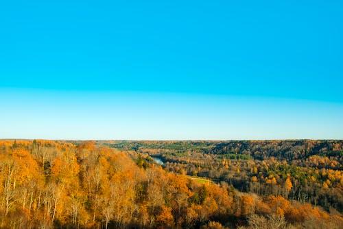 Foto d'estoc gratuïta de arbres, bosc, boscos, cel