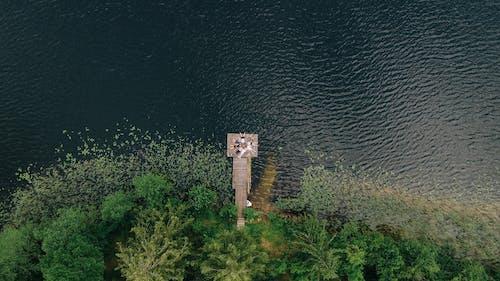 Imagine de stoc gratuită din arbori, copaci, corp de apă