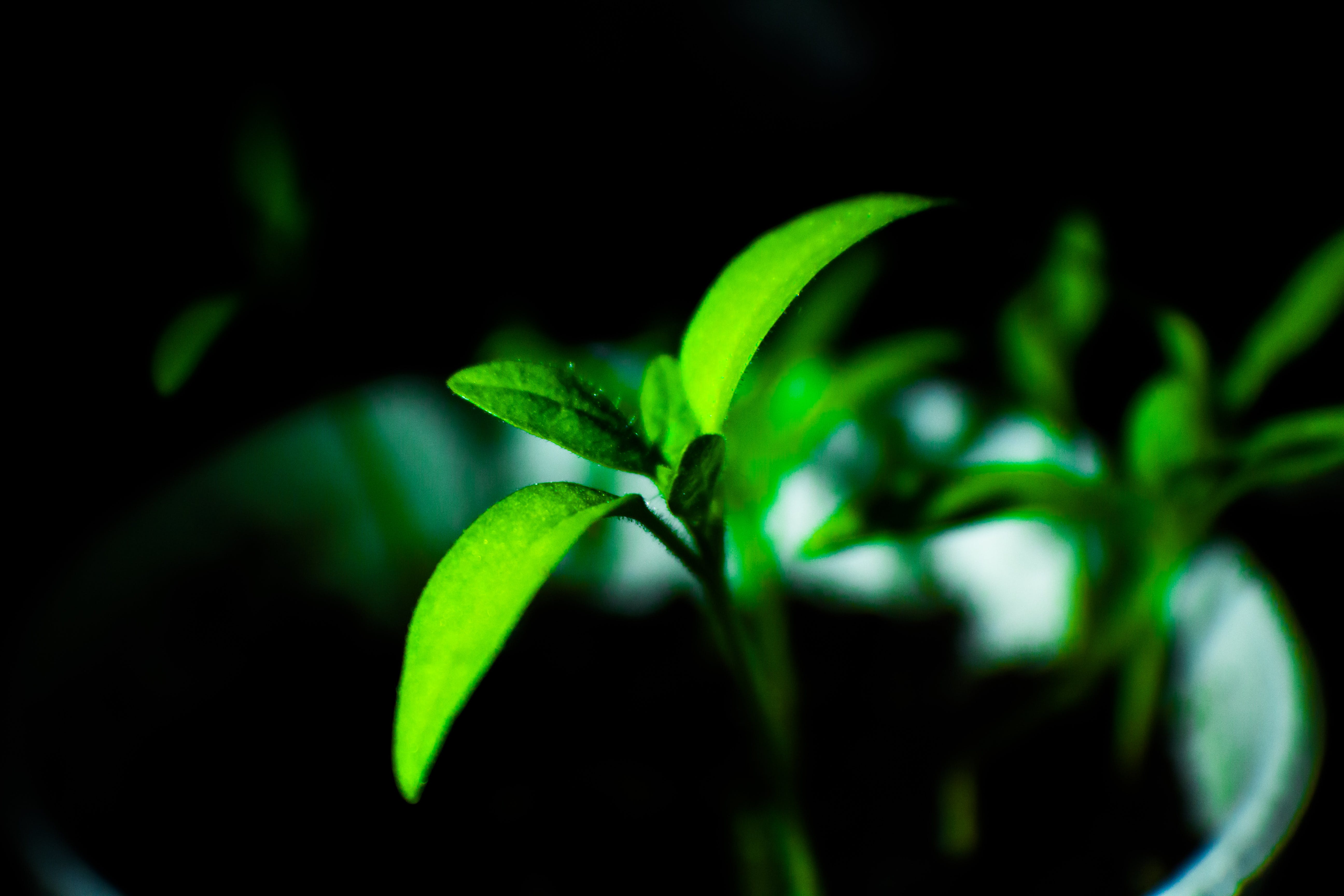 Free stock photo of nature, night, plant, green