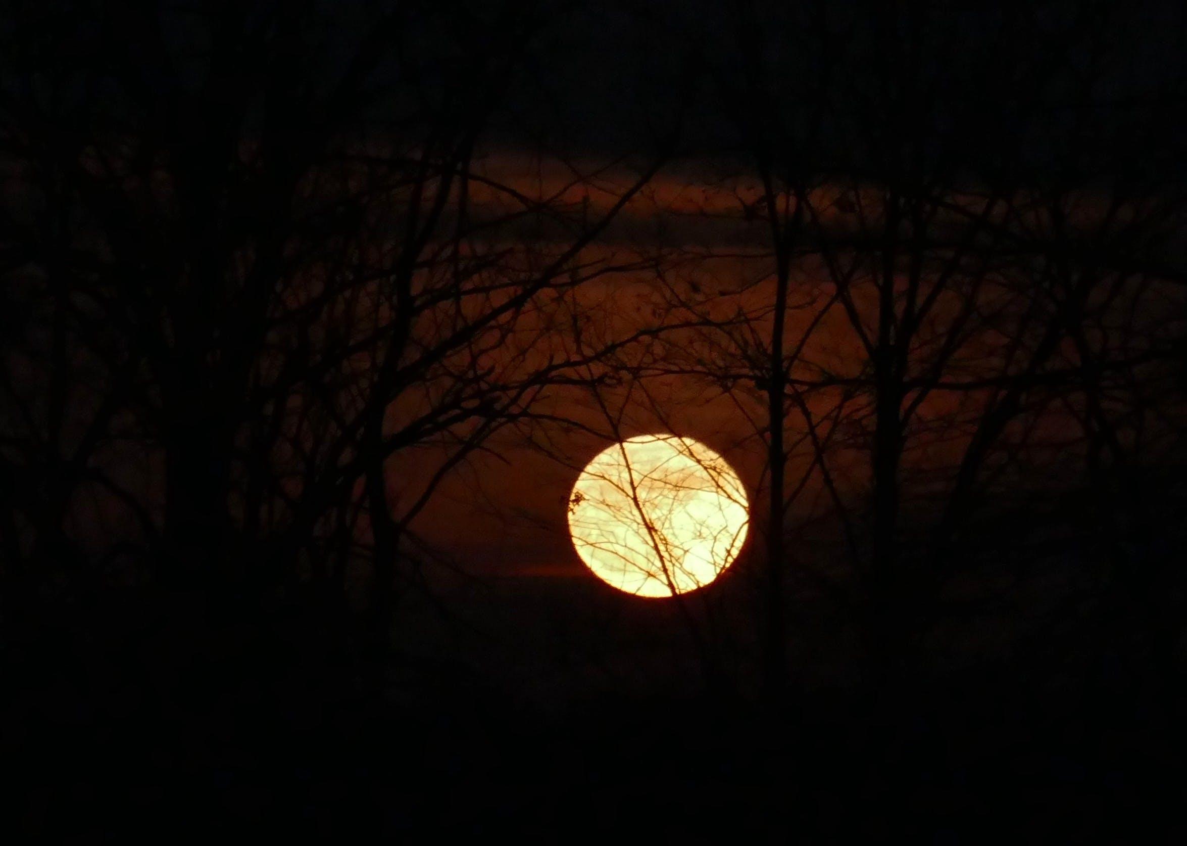 スーパームーン, 月, 月の出の無料の写真素材