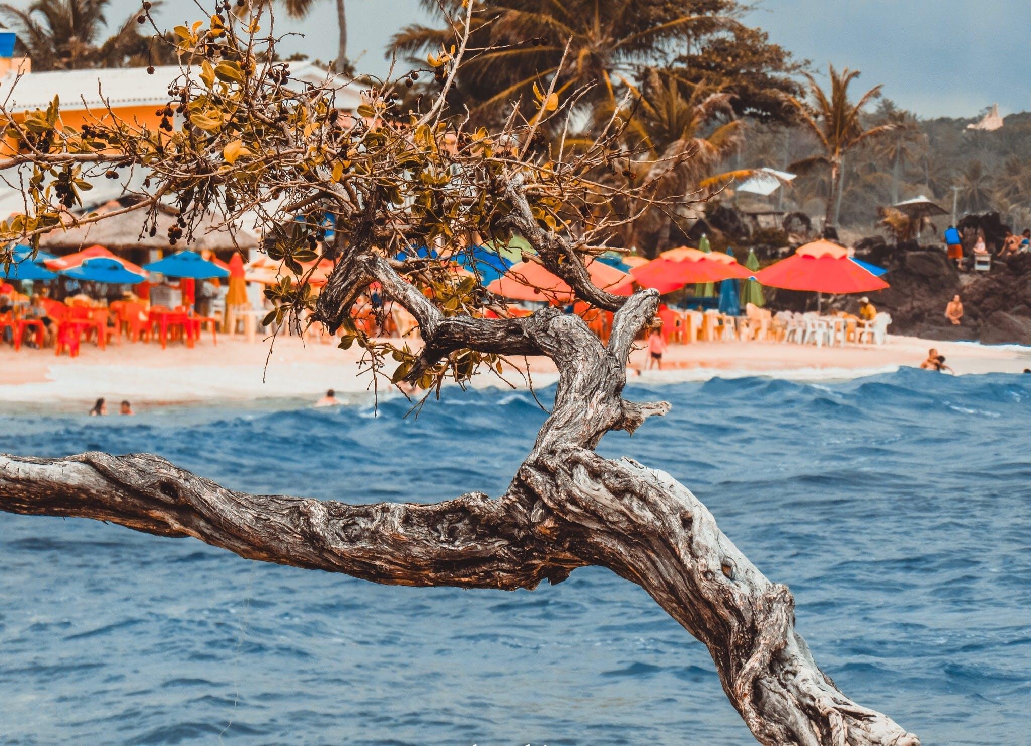 Fotobanka sbezplatnými fotkami na tému breh, cestovný ruch, dáždniky, fotka