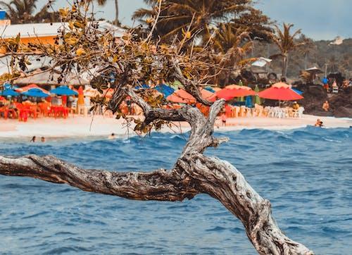 açık hava, ağaç gövdesi, ağaçlar, dalgalar içeren Ücretsiz stok fotoğraf