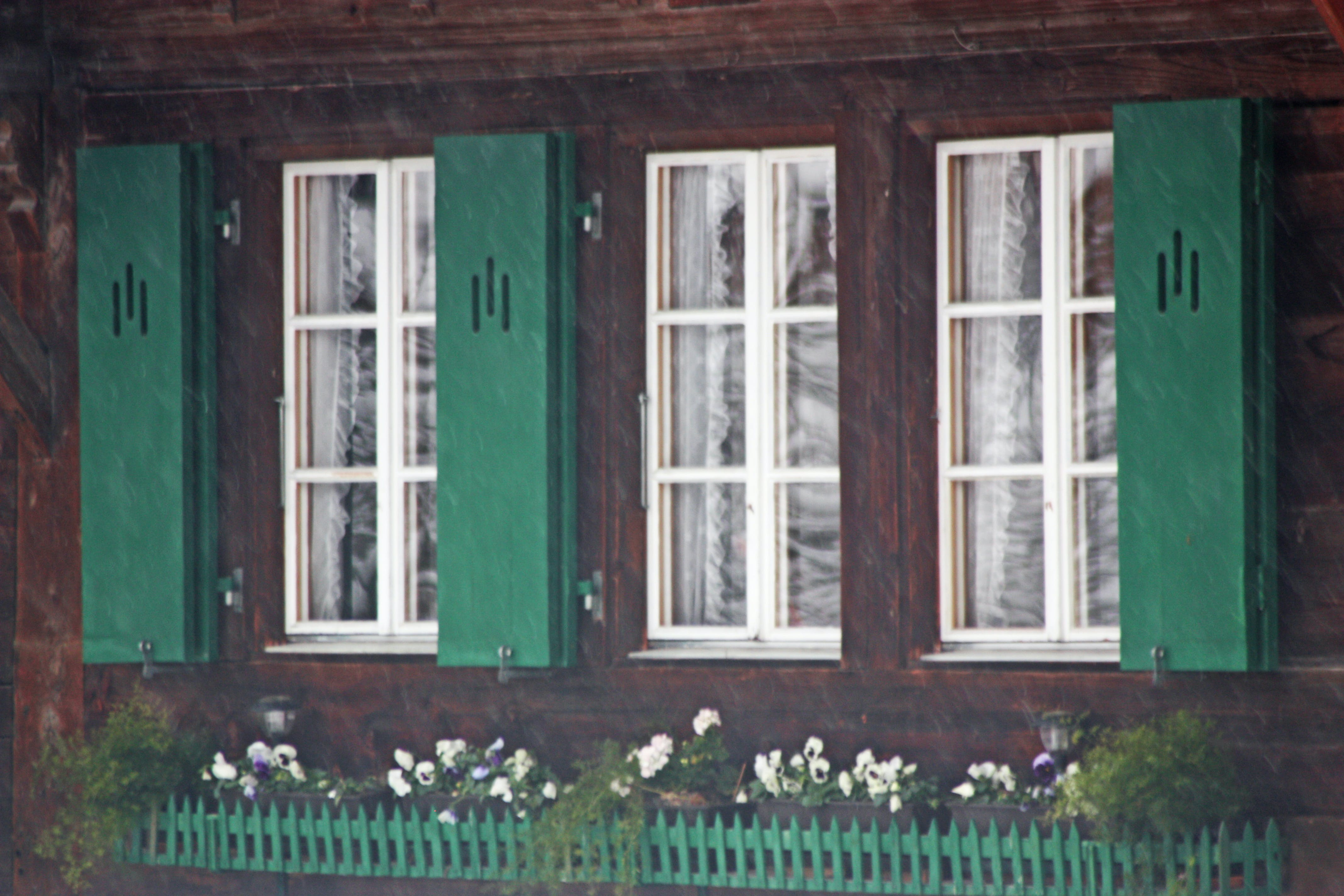 Free stock photo of cold, flowers, green, green shutters