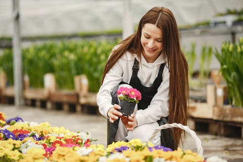 Fotobanka sbezplatnými fotkami na tému črepníková rastlina, florista, floristka