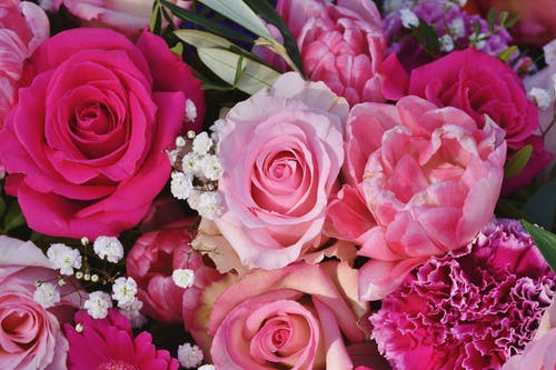 A Close-Up Shot of a Bouquet of Pink Flowers