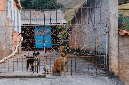 Free stock photo of animal, baby dog, cute animals