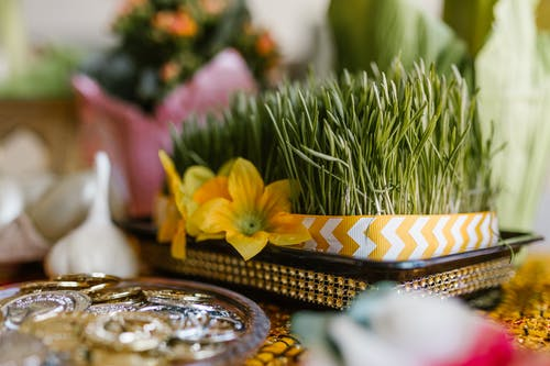 Wheat Sprouts And Golden Coins On Table