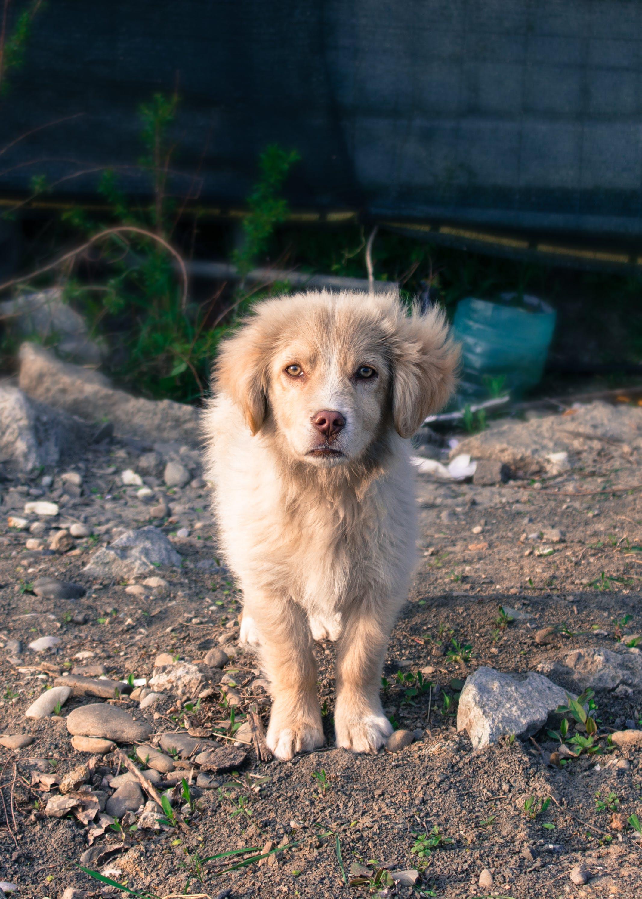Gratis stockfoto met babyhondje, beest, hond, huisdier