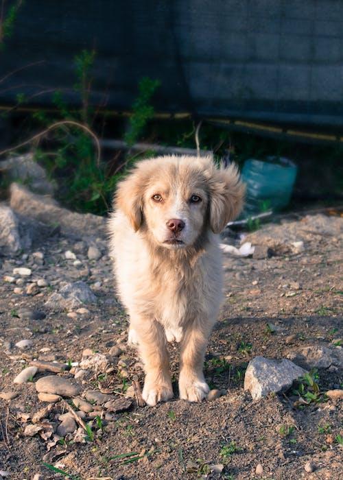 Ảnh lưu trữ miễn phí về chó, con vật, cún yêu, dễ thương