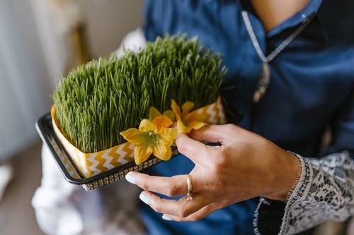 Woman Holding A Box Of Wheat Sprouts