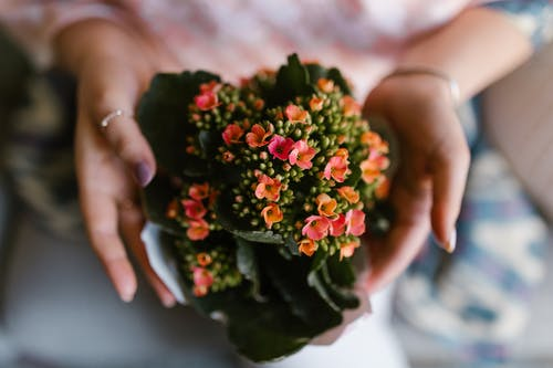 Person Holding A Bunch Of Tiny Flowers