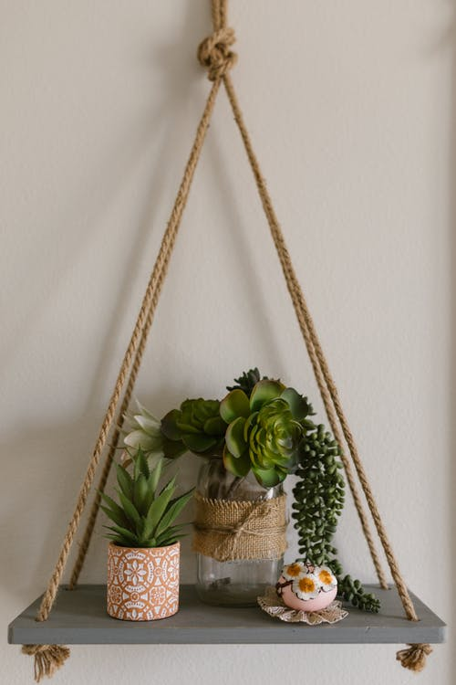 Display Of Succulent Plants On A Hanging Wood