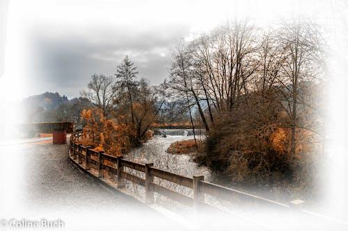 Бесплатное стоковое фото с arbres, magdeleine, заграждение