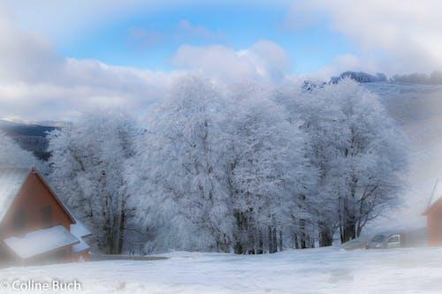 Бесплатное стоковое фото с arbres, givre, neige, шале