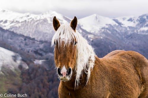 Photos gratuites de cheval, les pyrénées, montagne, neige
