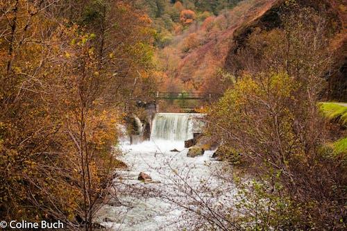 Бесплатное стоковое фото с automne, couleurs, feuillage, riviã¨re