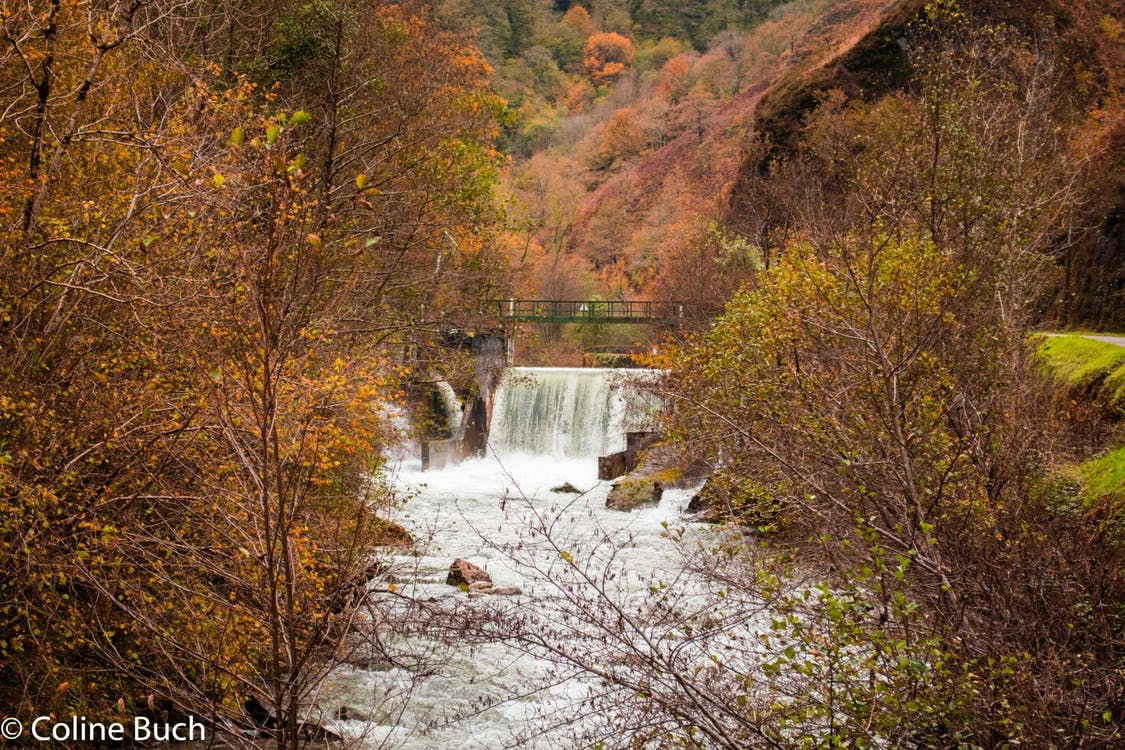automne, couleurs, feuillage