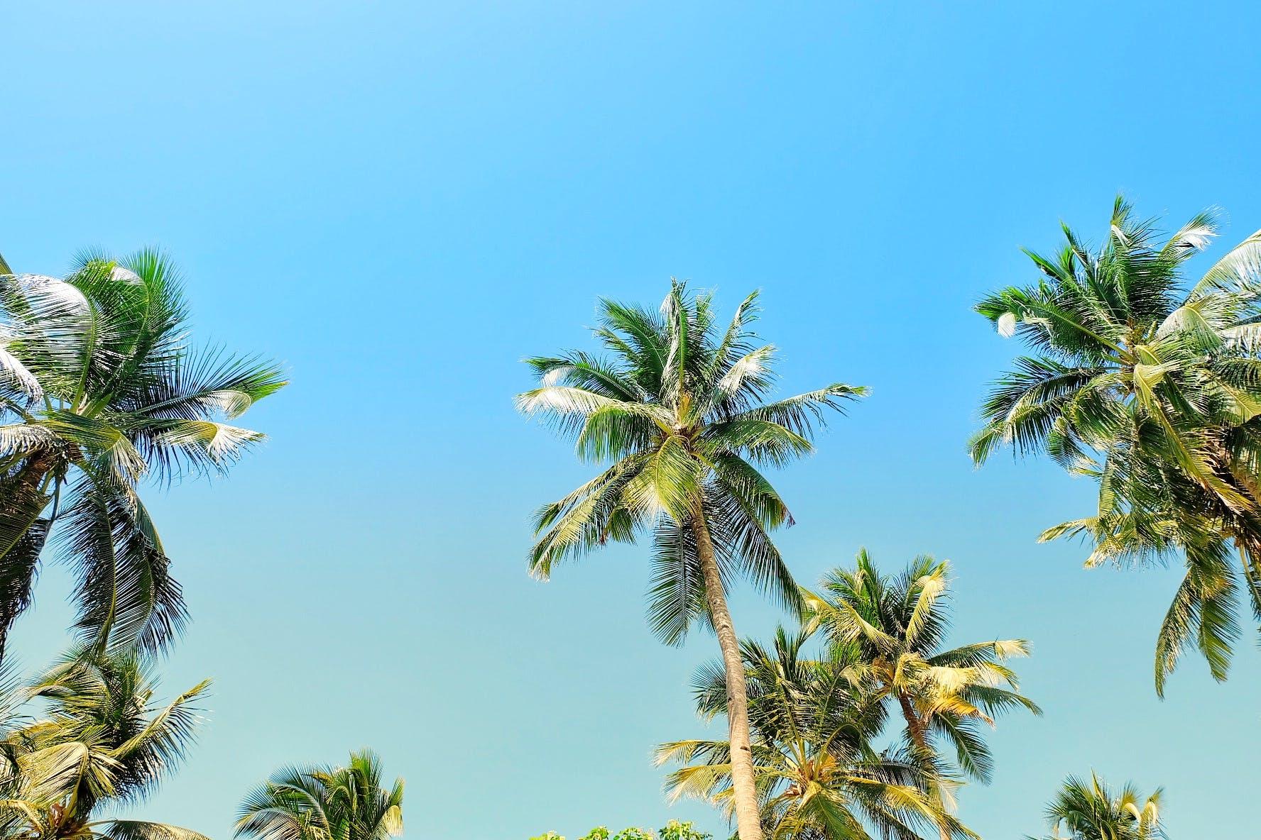 Free stock photo of beach, blue, coconut trees, sky