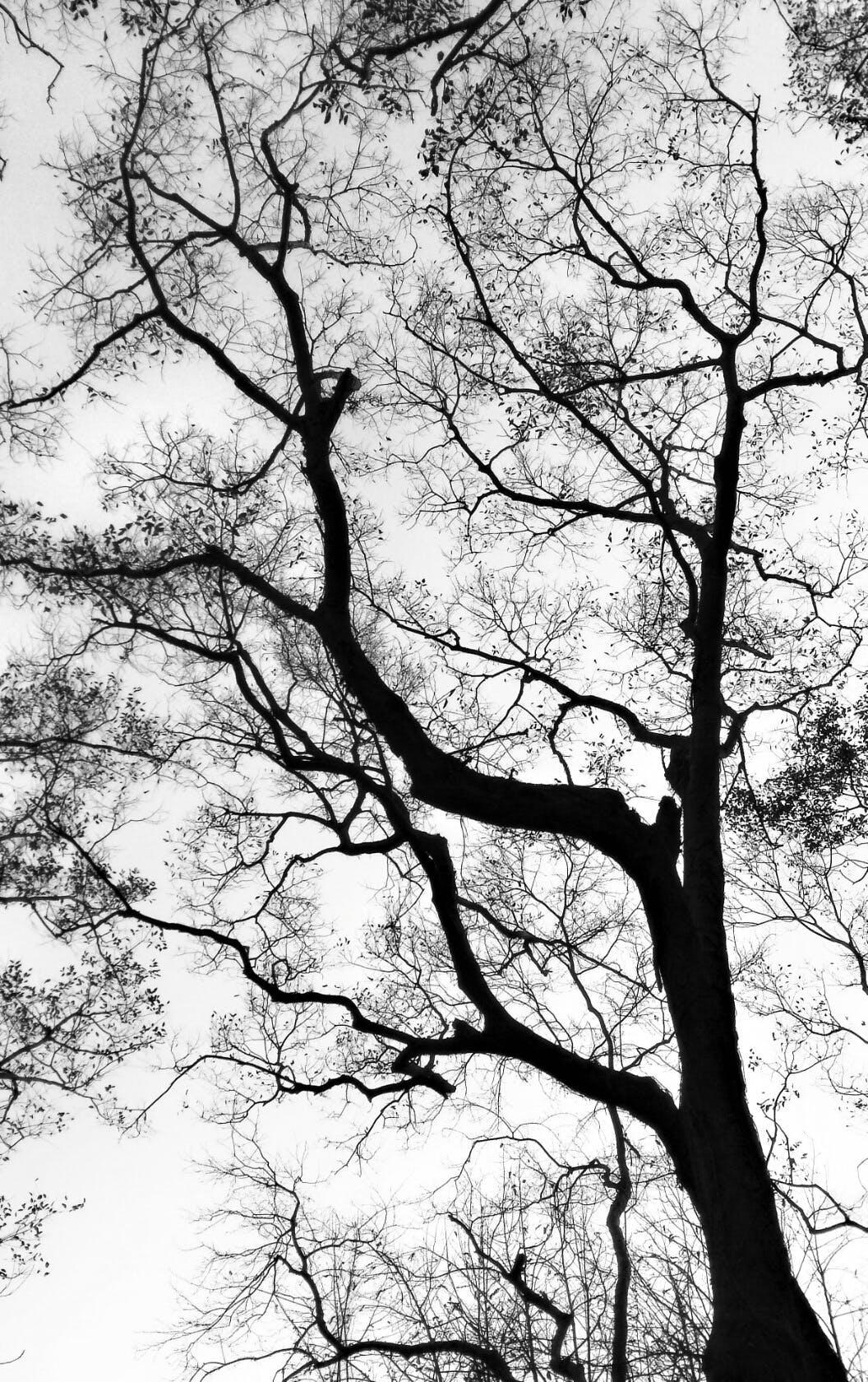 Free stock photo of nature, plant, tree, black